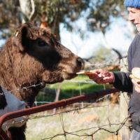 Ipsaro Farming Photos (4)