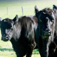 Ipsaro Farming Photos (6)